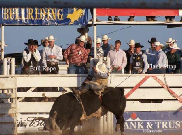 Rodeo bulls 2